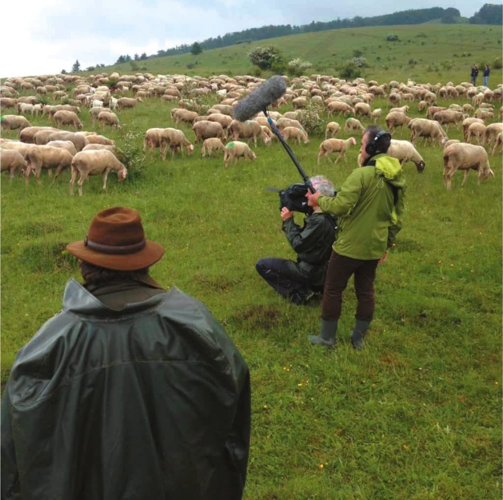 Bloß nicht anfangen zu zählen, sonst ist der Tag gelaufen: Schafe in Franken.